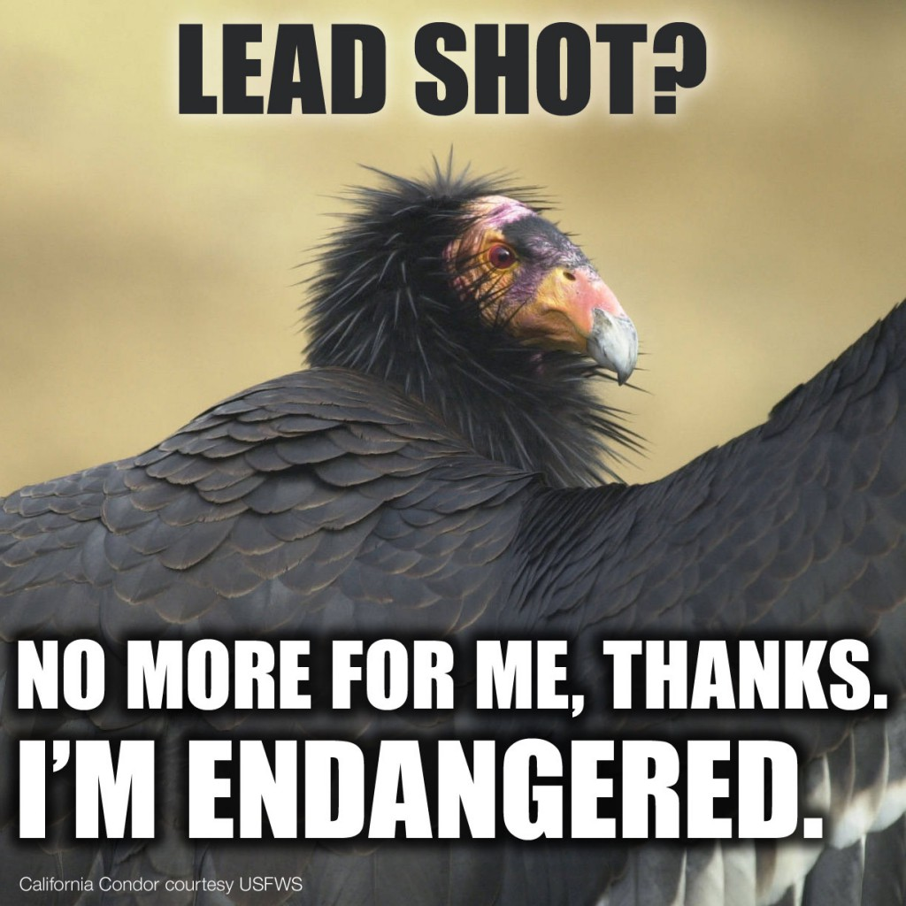This image was intended to elicit online action, urging legislators to support AB 711 to ban lead shot to protect the threatened California condor. This bill passed and was signed into law.
