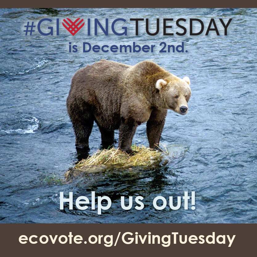"We made a whimsical ""charismatic megafauna"" campaign to encourage donations on the Tuesday after Thanksgiving in 2014, dubbed ""Giving Tuesday"" (a worldwide non-profit campaign intended to build on the cachet of ""Black Friday"" and ""Cyber Monday"")."